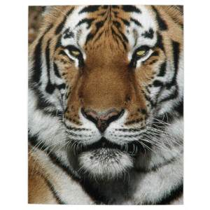 Tiger Jigsaw Puzzles